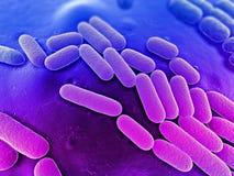 细菌例证 库存例证