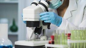 细菌学家细菌观察样品特写镜头在显微镜,病毒学的 免版税图库摄影
