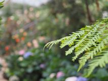 细长的蕨叶子宏指令  库存照片
