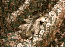 织品和橡木叶子的片段 图库摄影