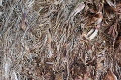 织地不很细棕榈树吠声样式 库存照片