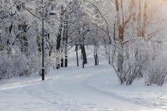 经典灯笼、结冰的树和足迹在公园 冬天风景,晴天 图库摄影