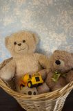 经典玩具熊对在篮子的蓝色墙壁 图库摄影
