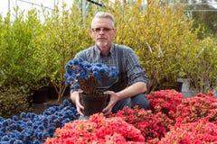 经理在商店窗口附近的园艺中心与花 他拿着一个花盆 免版税库存图片