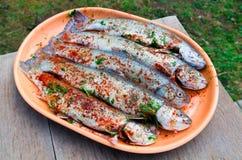 经验丰富的鳟鱼 免版税库存图片