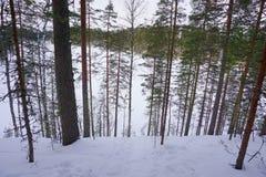 结冰的湖通过树,Punakaharju,芬兰 免版税库存照片