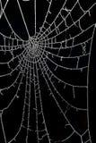 结冰的露滴在蜘蛛网 图库摄影
