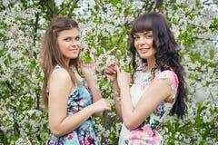 结合享用开花的树的气味年轻美丽的妇女在一个晴天 免版税库存图片