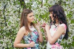 结合享用开花的树的气味年轻美丽的妇女在一个晴天 免版税库存照片