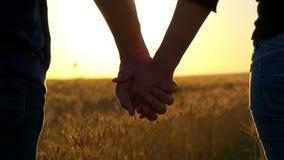 结合握在一块金黄麦田的手在美好的日落 慢的行动 影视素材