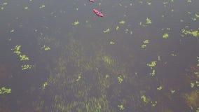结合用浆划在享受安静,有薄雾的湖的皮船 股票录像