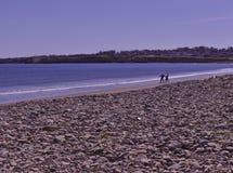 结合跳的石头在海滩3495 免版税库存照片