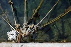 结和绳索 免版税库存图片