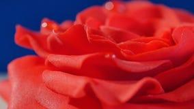 结块,一与红色玫瑰的层数白色和棕色巧克力蛋糕在上面,宏指令 用可食装饰的被切的巧克力蛋糕 免版税库存图片