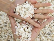 结婚的壳海滩 免版税图库摄影