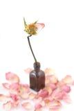结束干粉红色玫瑰唯一  免版税图库摄影