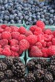 结束新鲜有机被种植的浆果  图库摄影