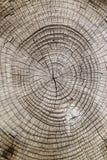 结束木的剪切纹理 免版税库存图片