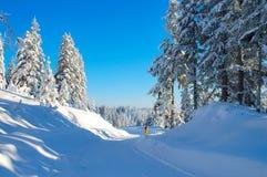 结构冬天 免版税图库摄影