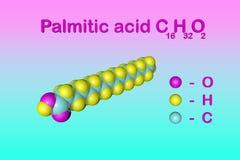 结构化学式和分子模型棕榈酸棕榈油,最共同饱和脂肪酸 皇族释放例证