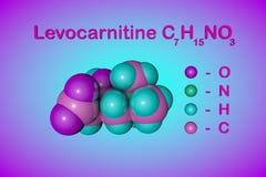 结构化学式和levocarnitine,L肉毒碱,维生素B11分子模型  E 3d 库存例证