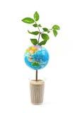 结构树世界 库存图片