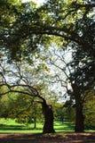 结构树二 免版税图库摄影