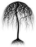 结构树伞 免版税图库摄影