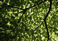 结构树伞 库存图片