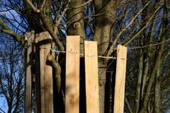 结构树保护 免版税库存照片