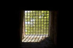 结构树关在监牢里 库存图片
