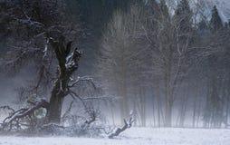 结构树冬天 图库摄影