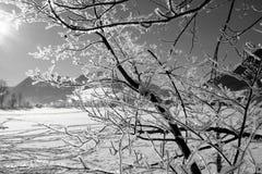 结构树冬天 免版税库存照片