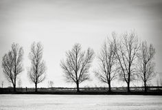 结构树冬天 库存图片