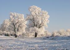 结构树冬天 库存照片