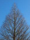 结构树凋枯了 图库摄影
