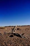 结构树凋枯 图库摄影