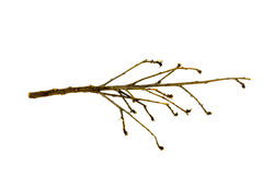 结构树分行  免版税库存照片