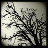 结构树剪影 库存图片