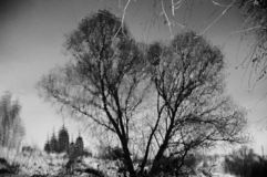 结构树反映在水中 免版税库存照片