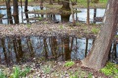 结构树反映在池塘 免版税库存照片