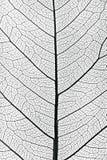 结构树叶子关闭 免版税库存图片