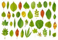 结构树叶子 免版税库存图片