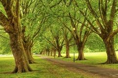 结构树叶茂盛大道在公园 免版税库存图片
