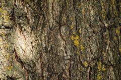 结构树吠声 抽象背景设计 特写镜头 免版税库存图片