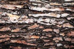 结构树吠声 无缝的Tileable纹理 免版税库存图片