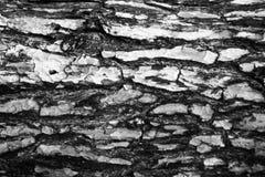 结构树吠声 无缝的Tileable纹理 库存照片