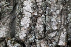 结构树吠声 免版税图库摄影