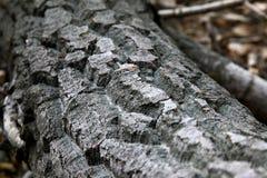 结构树吠声 免版税库存照片