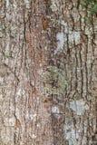 结构树吠声  免版税库存图片